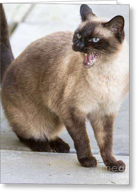 Hiss Greeting Cards - Cat Hiss Greeting Card by Laura L Leatherwood