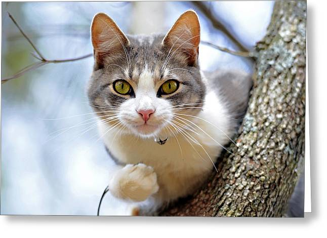 Cat In A Tree Greeting Card by Susan Leggett
