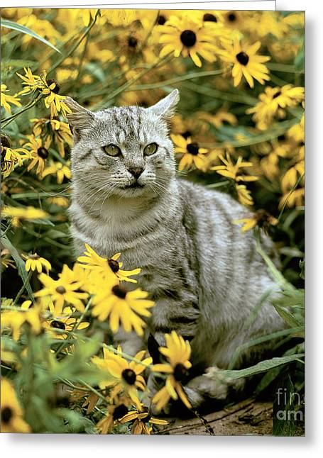 Gray Hair Greeting Cards - Cat In Flowers Greeting Card by Hans Reinhard/Okapia