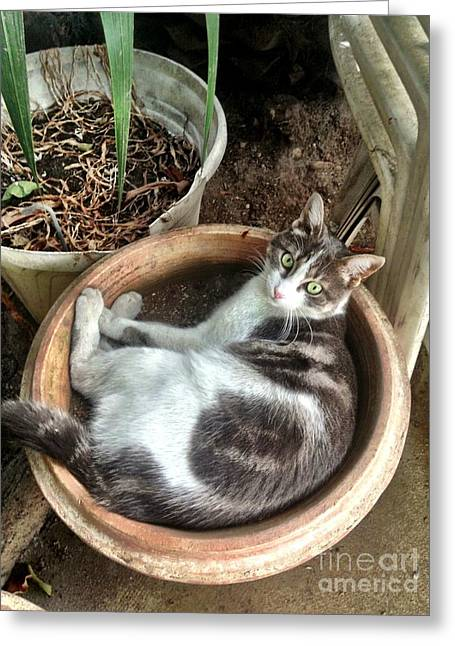 South Of France Mixed Media Greeting Cards - Cat In Planter Greeting Card by Lauri Serene