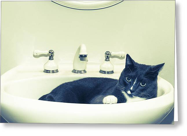 Cat Photo Greeting Cards - Cat In The Sink Greeting Card by Susan Stone