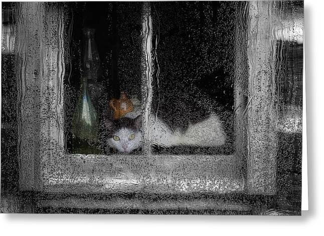Abstract Rain Greeting Cards - Cat In The Window Greeting Card by Jack Zulli