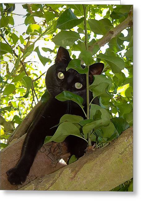 Mog Greeting Cards - Cat in tree Greeting Card by Jenny Setchell