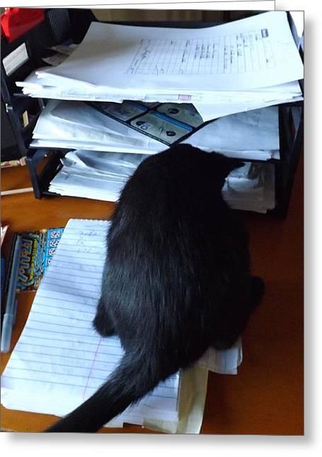 Inbox Greeting Cards - Cat Inbox Greeting Card by Jussta Jussta