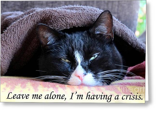 Art Photography Greeting Cards - cat Leave me alone Greeting Card by Art Photography