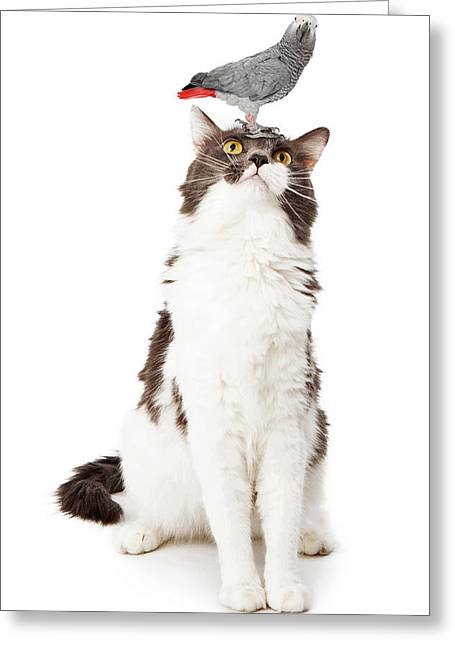 Playful Greeting Cards - Cat Looking Up at a Bird Greeting Card by Susan  Schmitz