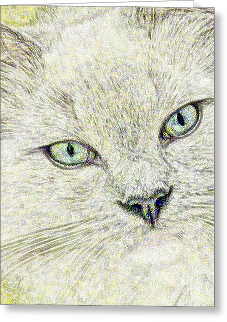 Contemplative Drawings Greeting Cards - Cat - Mink Ragdoll - Smokey Blu Greeting Card by Donna E Pickelsimer