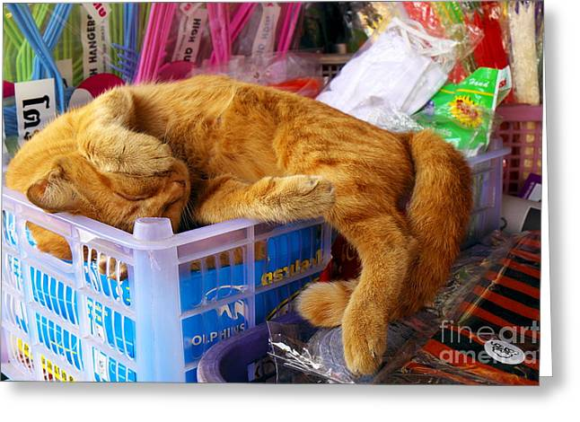 Napping Cat Greeting Cards - Cat Nap 2 Greeting Card by Dean Harte