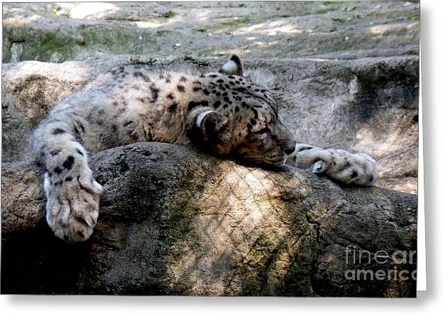 Cat Nap Greeting Card by Chad Thompson