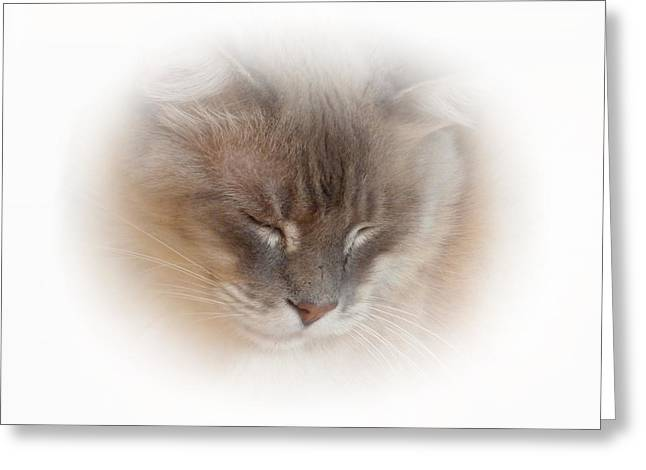 Small Cats Greeting Cards - Cat Nap Greeting Card by Connie Handscomb