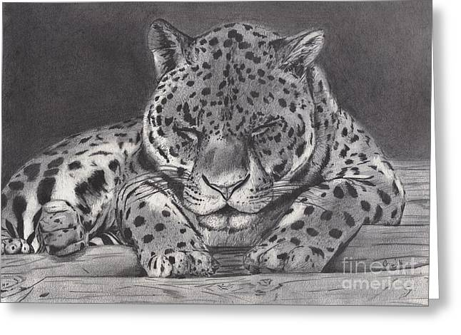 Leopard Drawings Greeting Cards - Cat Nap Greeting Card by Celia Fedak