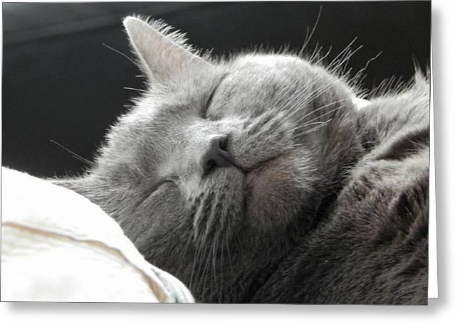 Cat Nap Greeting Card by Karen Cook