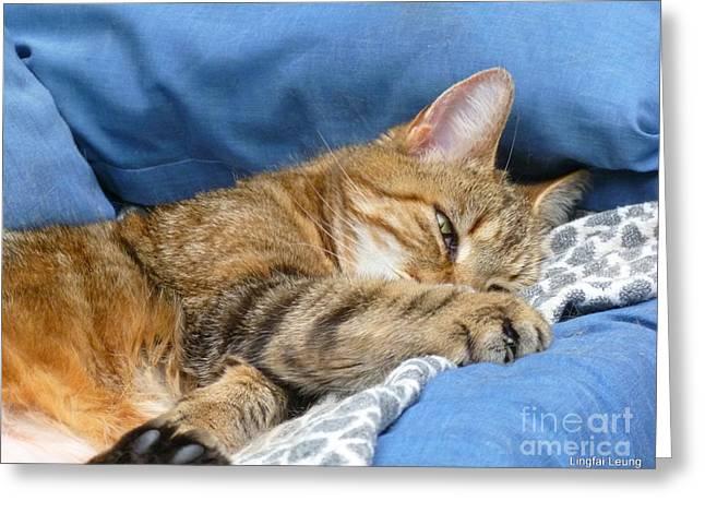 Catnap Greeting Cards - Cat Nap Greeting Card by Lingfai Leung
