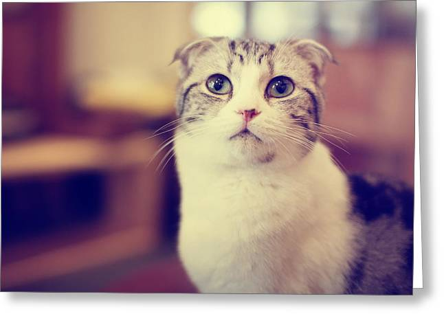 Matsu Greeting Cards - Cat number 1 Greeting Card by Hakai Matsu