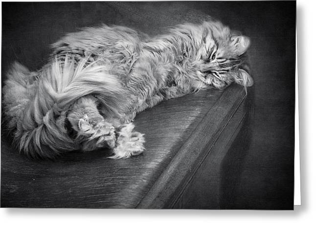 Diane Schuster Greeting Cards - Cat On A Bench Monochrome Greeting Card by Diane Schuster