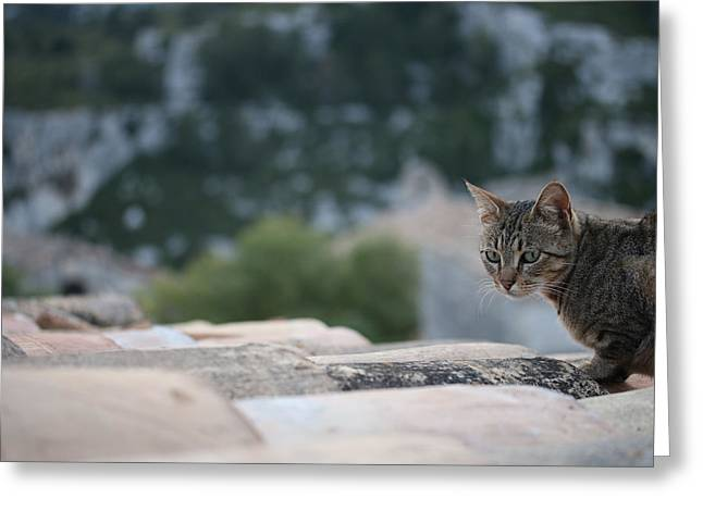Pictures Of Cats Greeting Cards - Cat on a Hot Terracotta Roof Greeting Card by Jason Liebman
