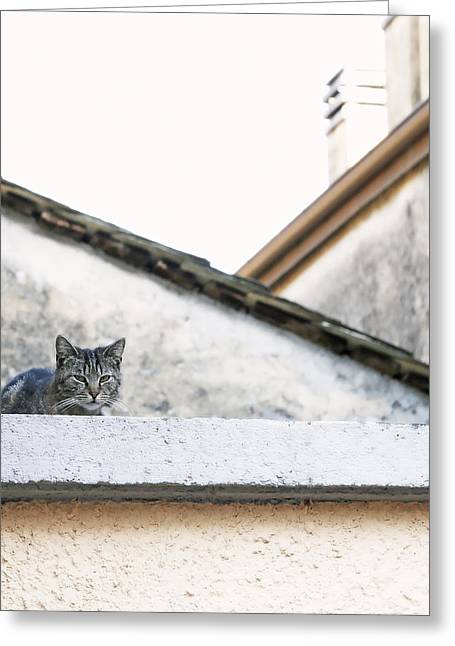 Brown Greeting Cards - Cat on a Roof Greeting Card by Brooke Ryan