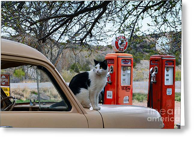 New To Vintage Greeting Cards - Cat on Old Truck in New Mexico Greeting Card by Catherine Sherman