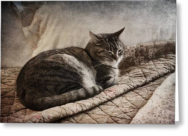 Cat Companions Greeting Cards - Cat on the Bed Greeting Card by Carol Leigh