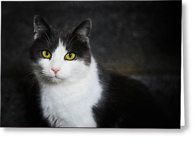 Cat Portrait With Texture Greeting Card by Matthias Hauser