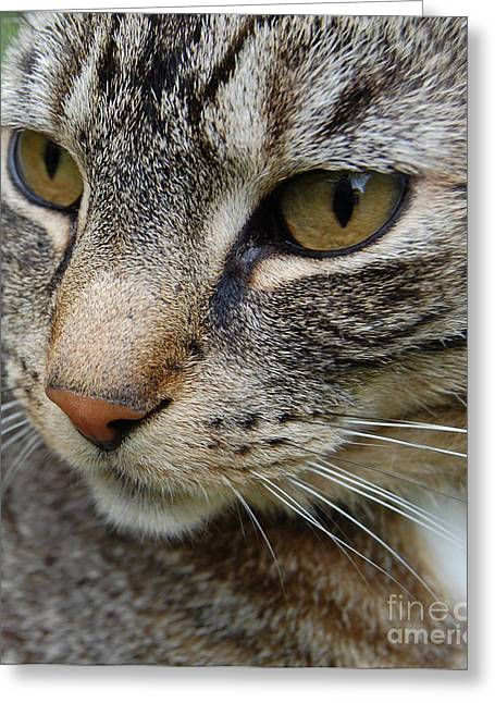 Looking At The Stars Greeting Cards - Cat Profile Greeting Card by Yggdrasil Art