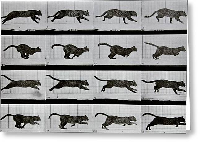 Cat Prints Photographs Greeting Cards - Cat running Greeting Card by Eadweard Muybridge
