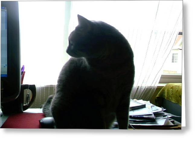 Kitty Kat Greeting Cards - Cat Silhouette 2 Greeting Card by J D Owen