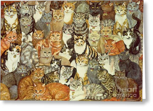 Mammals Greeting Cards - Cat Spread Greeting Card by Ditz