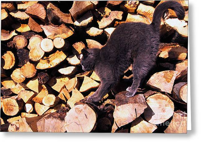 """house Cat"" Greeting Cards - Cat Stretching on Firewood Greeting Card by Thomas R Fletcher"