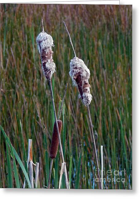 Pictures Of Cats Greeting Cards - Cat Tails Greeting Card by Skip Willits
