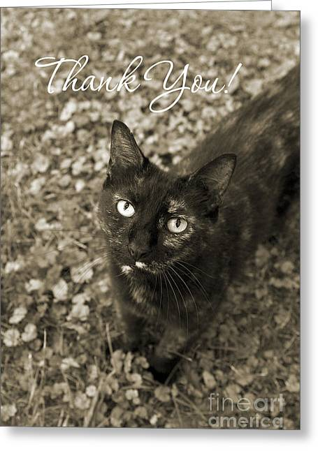 Moggy Greeting Cards - Cat Thank You Cards Greeting Card by Chris Scroggins
