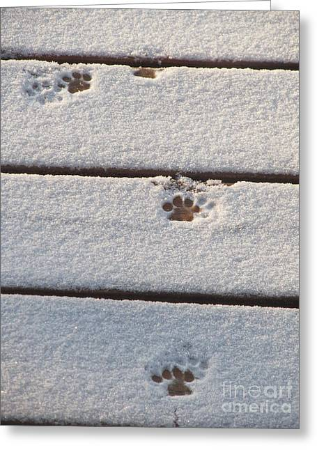 Kitten Prints Greeting Cards - Cat Tracks Greeting Card by Tracy L Teeter