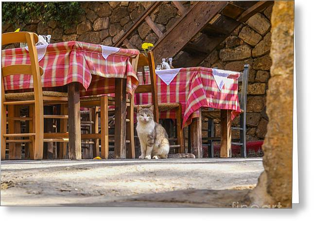 Mealtime Greeting Cards - Cat waiting for guests in restaurant Greeting Card by Patricia Hofmeester