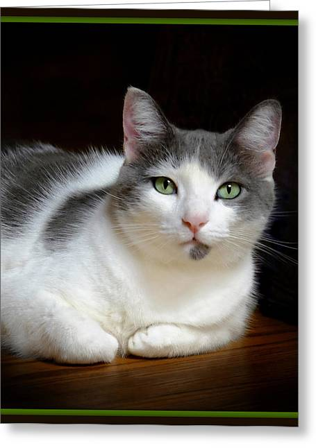 Kitten Prints Greeting Cards - Cat With Beautiful Green Eyes Greeting Card by Constance Lowery