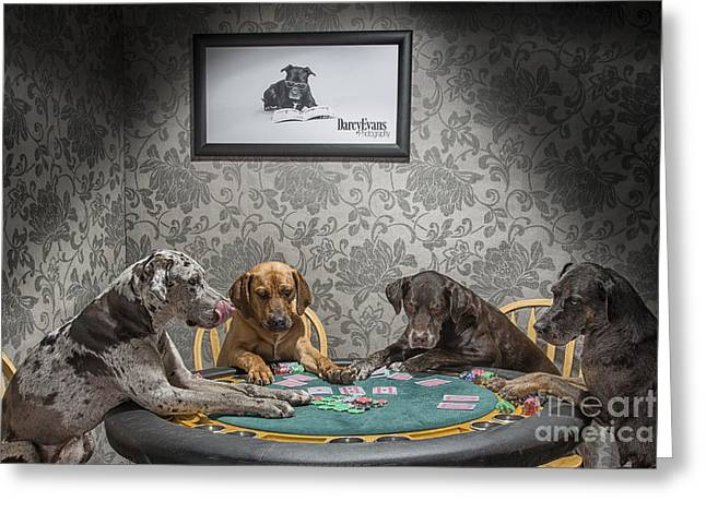Catahoula Greeting Cards - Cata-Coolidge Greeting Card by Darcy Evans