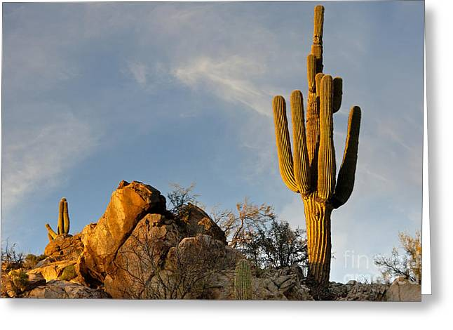Us Destinations Greeting Cards - Catalina State Park, Az Greeting Card by Richard & Ellen Thane