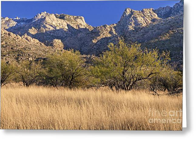 Catalina Mountains Greeting Cards - Catalina State Park Greeting Card by Richard & Ellen Thane