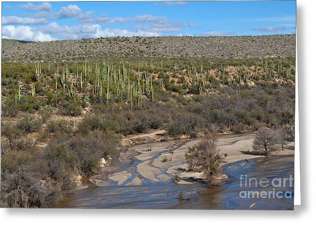 Catalina Mountains Greeting Cards - Catalina State Park Greeting Card by Richard and Ellen Thane