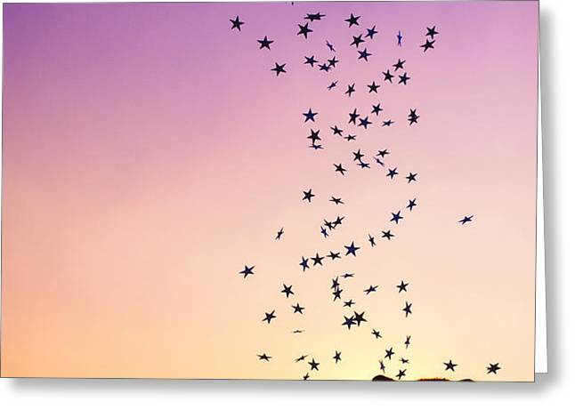 Catch a Falling Star Greeting Card by Tim Gainey