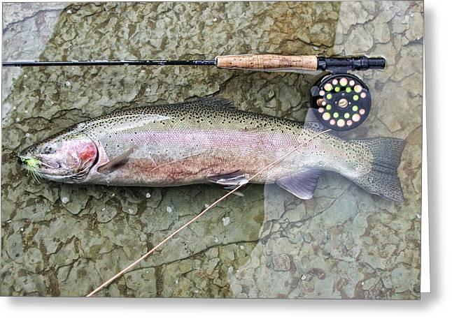 Catch And Release Greeting Cards - Catch and Release Greeting Card by David Armstrong