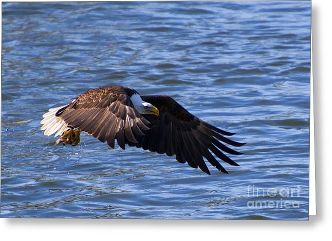 National Symbol Greeting Cards - Catch in Hand Greeting Card by Mike  Dawson