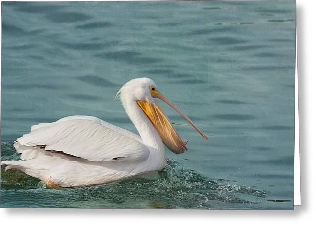 Seabirds Greeting Cards - Catch of the Day Greeting Card by Kim Hojnacki