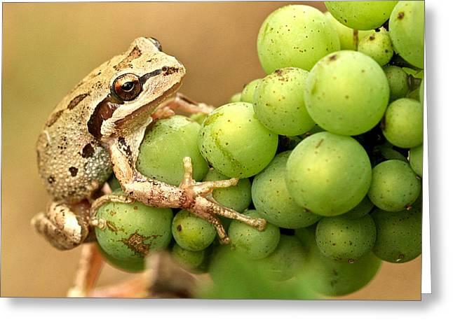 Winemaking Greeting Cards - Catching a ride on the pinot Greeting Card by Jean Noren