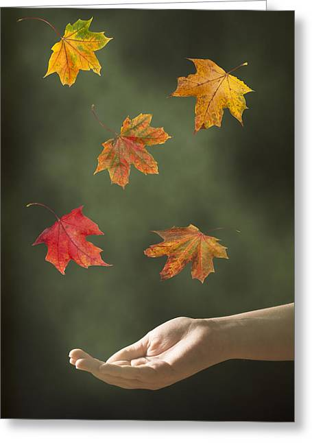 Floating Girl Greeting Cards - Catching Leaves Greeting Card by Amanda And Christopher Elwell