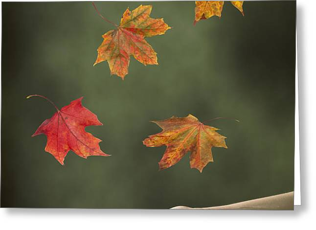 Catching Leaves Greeting Card by Amanda And Christopher Elwell