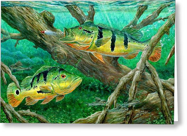 Terry Greeting Cards - Catching Peacock Bass - Pavon Greeting Card by Terry Fox