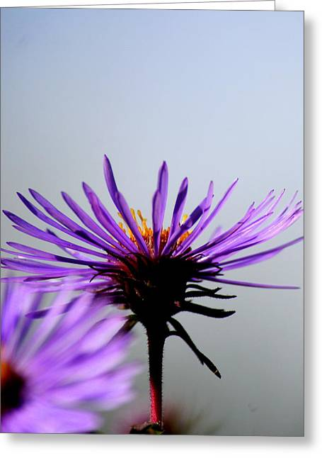 Flower Photograph Greeting Cards - Catching Sun  Greeting Card by Neal  Eslinger