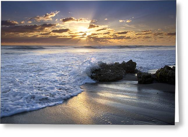 Hobe Sound Greeting Cards - Catching the Light Greeting Card by Debra and Dave Vanderlaan