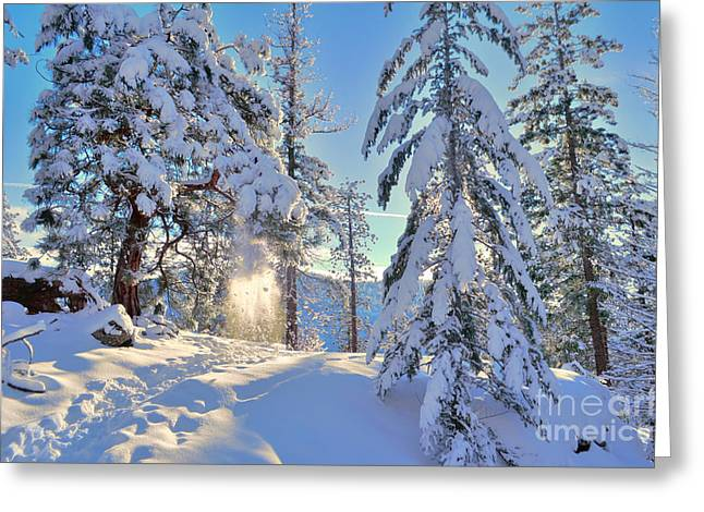 Snow-covered Landscape Greeting Cards - Catching the Light Greeting Card by Tara Turner