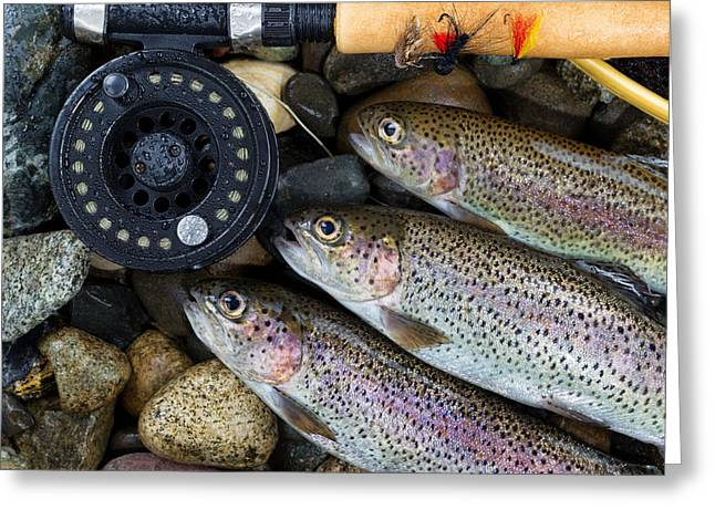 Rainbow Trout Greeting Cards - Catching Trout  Greeting Card by Tom  Baker